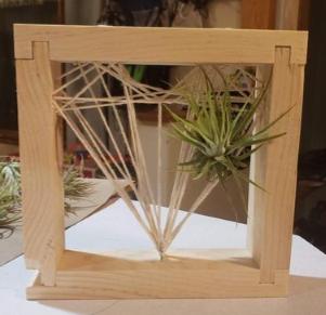 DIY Air Plants